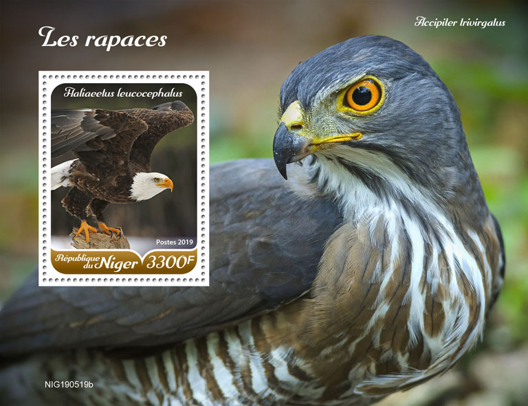 Raptors - Issue of Niger postage stamps